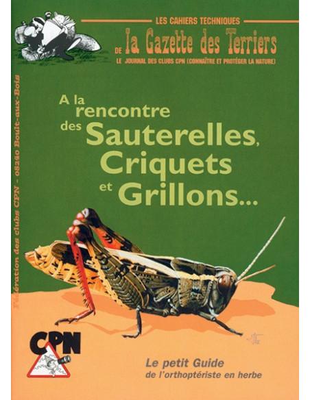 À la rencontre des sauterelles, criquets et grillons