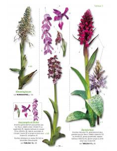 A la découverte des Orchidées d'Aquitaine - deuxième édition