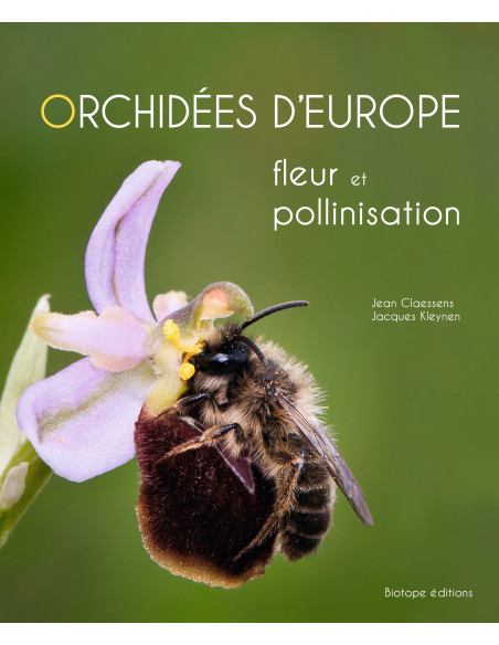 Orchidées d'Europe - Fleur et pollinisation