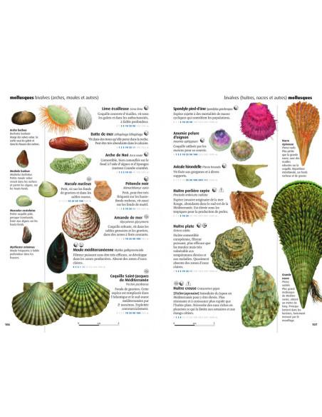 Faune et flore de la mer Méditerranée - Guide Visuel