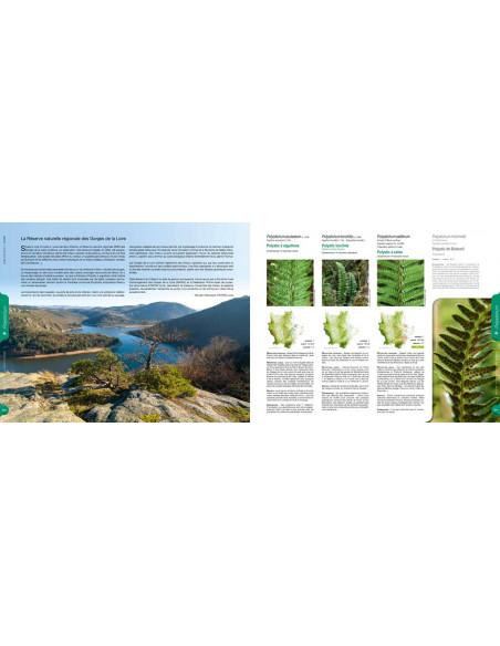 Plantes sauvages de la Loire et du Rhône  Atlas de la flore vasculaire