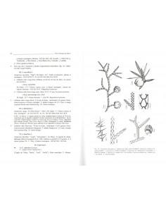 Flore pratique du Maroc