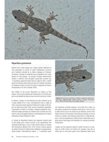Les reptiles des Pyrénées