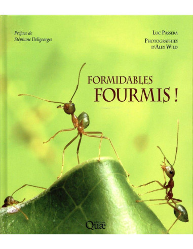 Formidables fourmis!