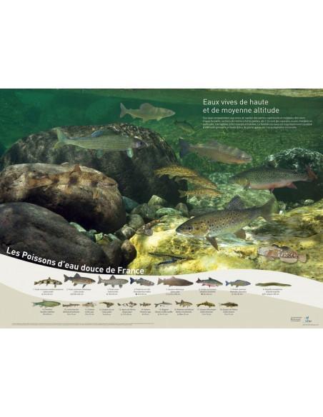 poster poissons - eaux vives haute et moyenne altitude