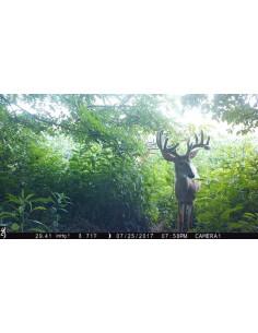 Piège photo vidéo Browning Command Ops Pro 2018 HD - 14 MP