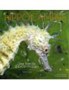 Hippocampes - Une famille d'excentriques