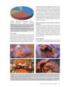 Les crustacés décapodes des Petites Antilles - Avec de nouvelles observations pour Saint-Martin, la Guadeloupe et la Martinique