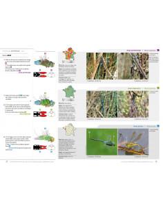 Cahier d'identification des libellules de France, Belgique, Luxembourg et Suisse - 2ème édition