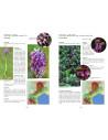 A la decouverte des orchidées en Languedoc et Pays Catalan