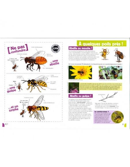 A la rencontre des abeilles solitaires