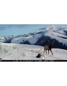 Piège photographique et vidéo Browning Strike Force PRO XD Full HD 2019-2020 - 24 MP