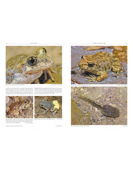 Amphibians and Reptiles of Morocco
