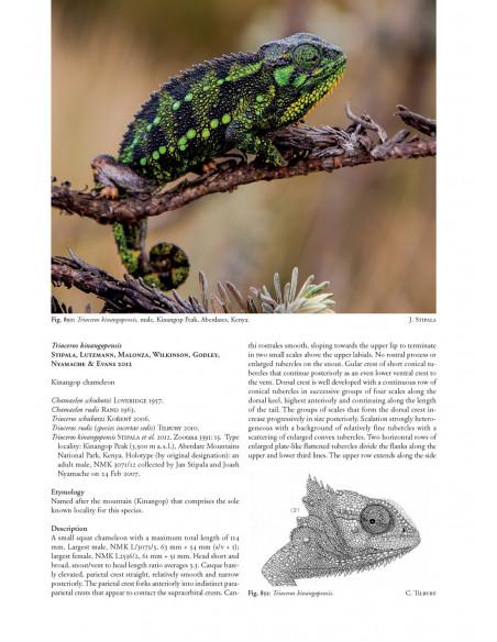 Chameleons of Africa