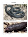 Venomous terrestrial Snakesof the Middle East