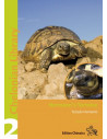 Hermann's tortoise - Boettger's and Dalmatian Tortoises