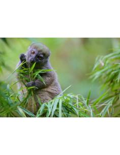 Madagascar, un paradis aux abois - A paradise in distress