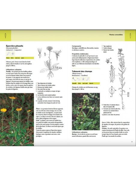 Plantes sauvages comestibles - Les 200 espèces les plus importantes