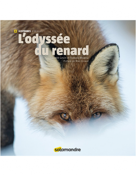 Histoire d'images : L'odyssée du renard
