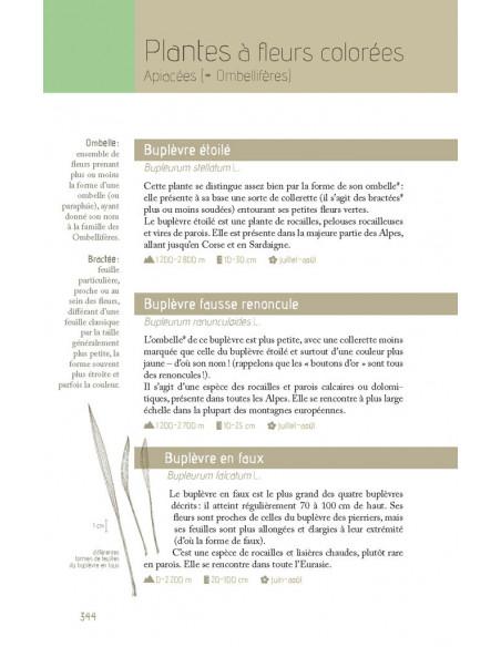 Flora verticalis - Guide botanique à l'usage des amateurs de verticalité
