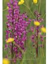 A la découverte des Orchidées des Charentes, du Poitou et de la Vendée - 2ème édition