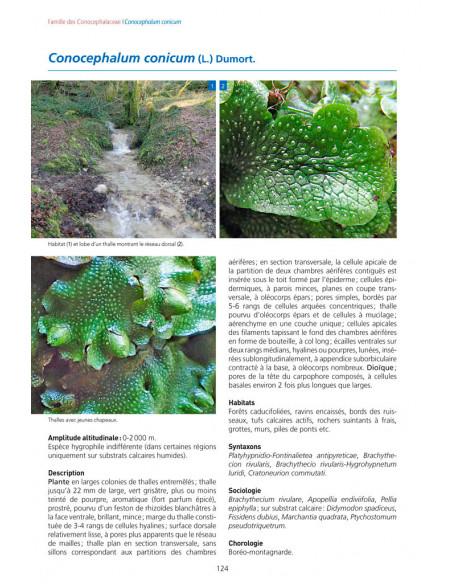 Les Bryophytes de France (Tome 1)