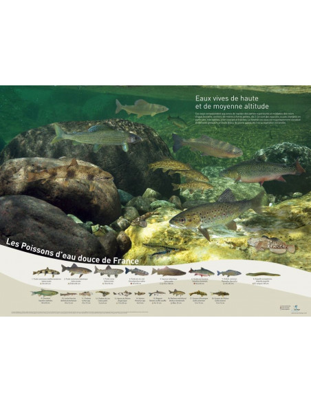 Pack 4 posters poissons d'eaux douces de France