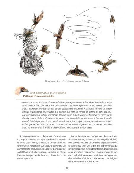 L'Aigle royal - Biologie, histoire et conservation - Situation dans le Massif central