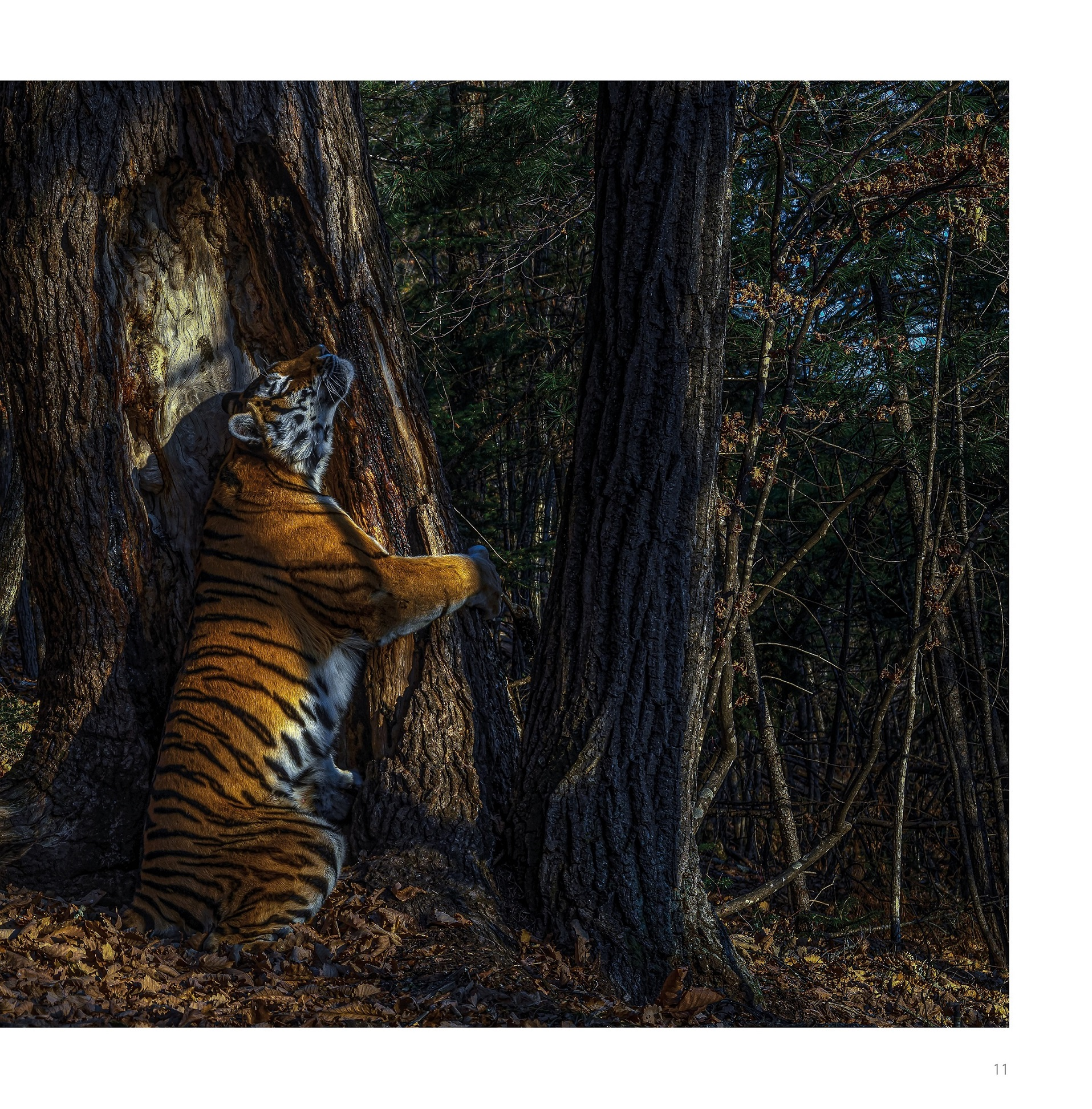 Wildlife Photographer of the Year 2020 - Les plus belles photos de nature - image gagnante