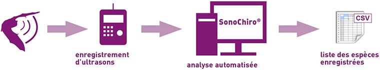 Schema traitement Enregistreur/SonoChiro/Fichier